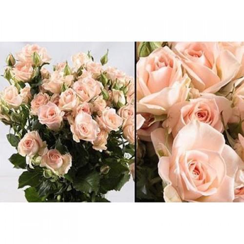 Розы кустовые нежно-розовые